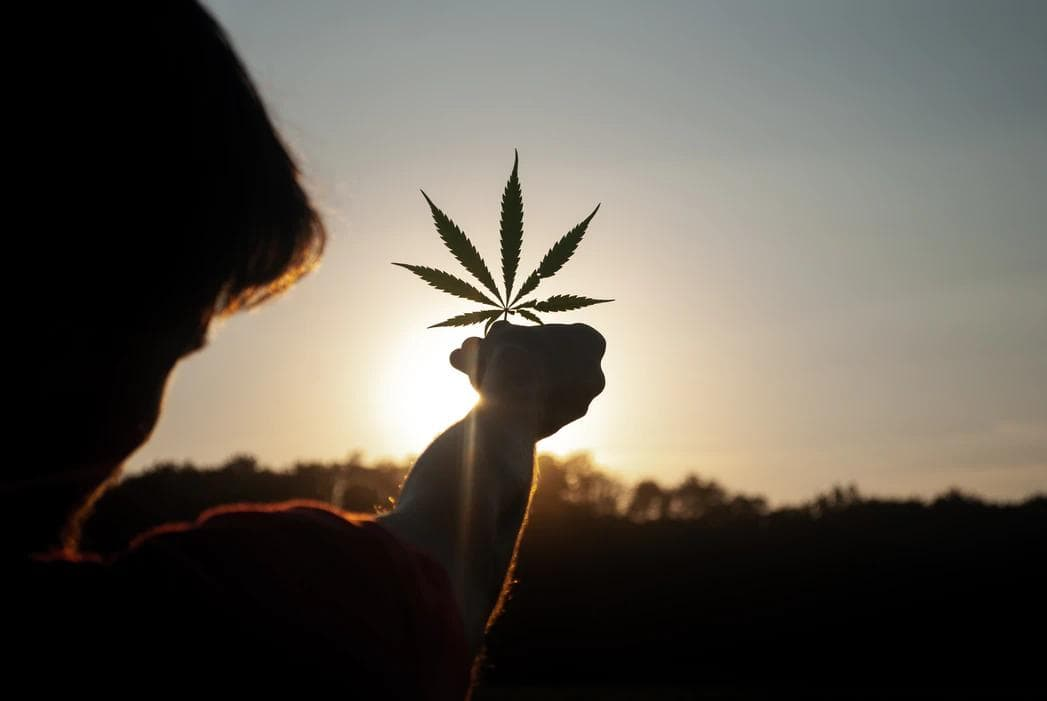 cbd and cbg from cannabis plants